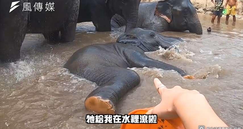 和大象親密戲水堪稱潑水節!快樂遊玩還能同時救大象,遊客比基尼零距離共浴值回票價【影音】