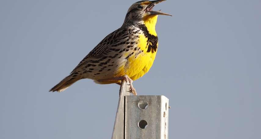 康乃爾研究:北美鳥類50年消失近30億隻!農業現代化引發「空中危機」