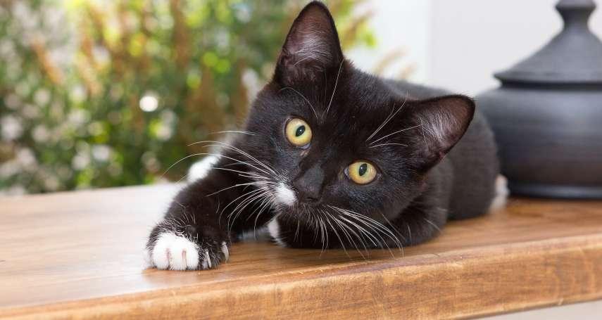 貓奴們,你家的喵星人其實很愛你!美國研究:貓咪會對人類產生情感依附,有主人在就感到安心