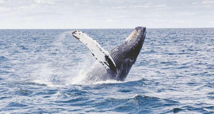 全球暖化有救了!只要停止捕鯨,就相當於瞬間長出20億棵成熟樹木