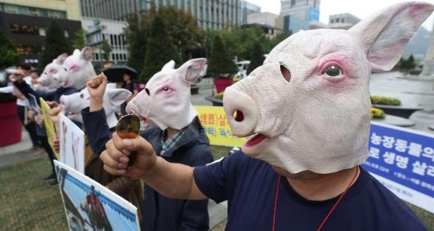 非軍事區一頭死豬,竟然引發朝鮮半島恐慌!