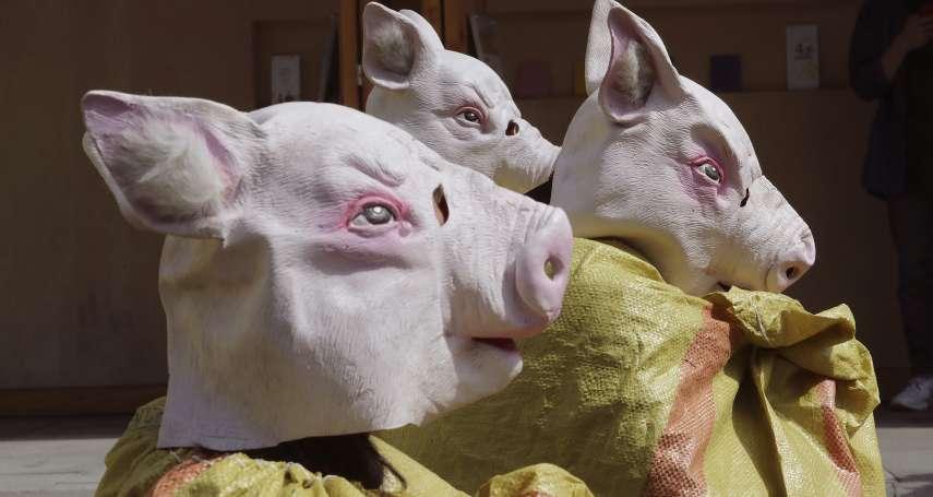 非洲豬瘟防疫視同作戰!南韓軍方下達「殺豬令」,阻絕北韓野豬穿越非軍事區