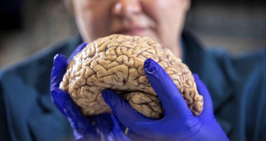 阿茲海默症、帕金森氏症治療希望「類器官」傳對痛覺有反應 恐踩人體實驗道德紅線