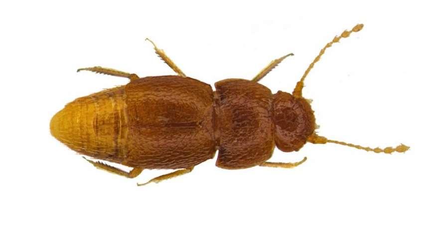 瑞典氣候少女鬥士通貝里變成一隻「沒有眼睛與翅膀的小蟲」?英國學者以命名將她的貢獻寫入生物史