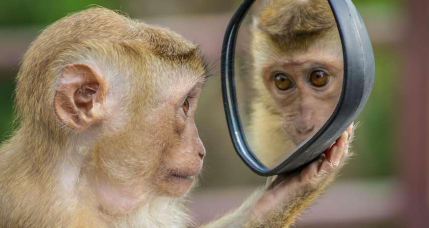 想去動物園玩?先把臉交上來!中國動物園要求進園「人臉辨識」,學者怒:明顯涉及違法