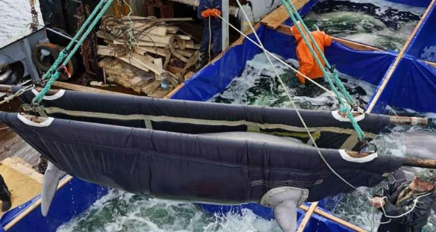 惡名昭彰的「鯨魚監獄」終於關閉!150萬人連署抗議,俄國當局被迫釋放最後一批白鯨