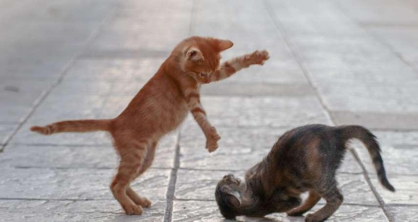 想讓新貓與舊貓和平相處,一點都不難!喵星人專家:用一雙襪子就能搞定