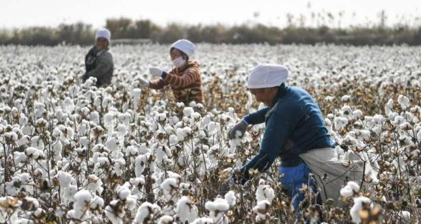 你身上的棉製衣服,可能出自維吾爾奴工之手?Uniqlo、無印良品疑採用新疆棉花惹議