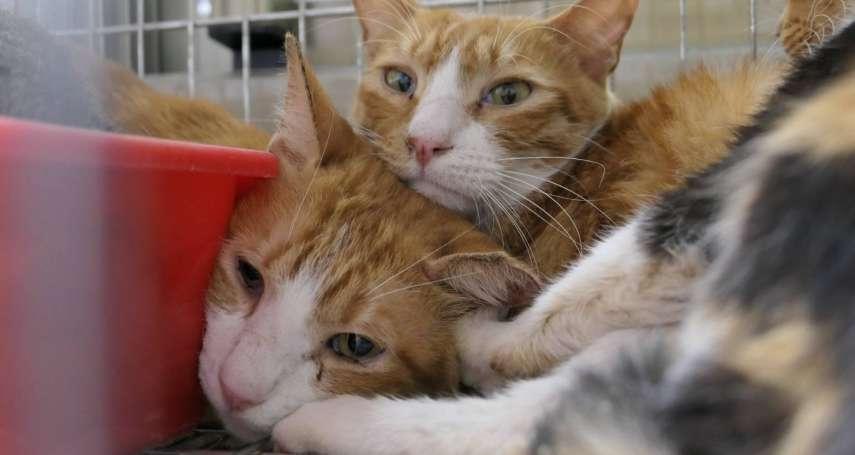 流浪動物希望協會理事長驟逝 北市動保處協助40隻貓咪找新家