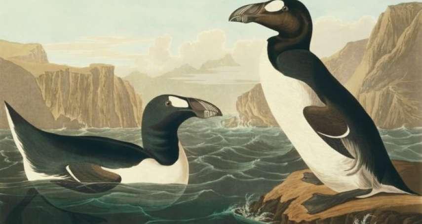 沒有人類,牠們不會消失......有「北極企鵝」之稱的「大海雀」滅絕悲劇