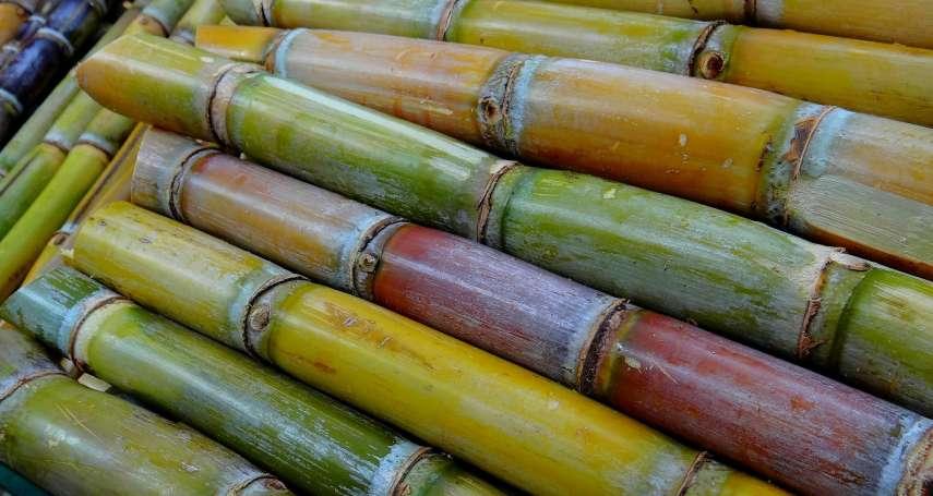 古代庶民吃不起糖?宋朝時用這種神祕方法提煉蔗糖、做甜點,蘇東坡還讚不絕口