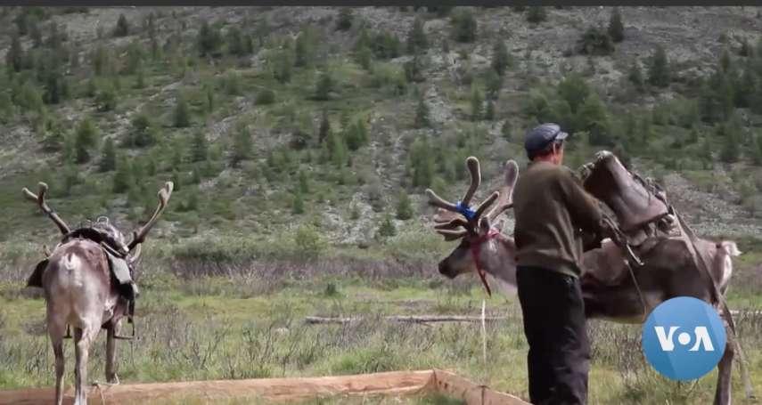 蒙古邊疆部落的艱難抉擇:靠鹿肉鹿奶過活的查坦人,該傳承遊牧文化還是進城求生?