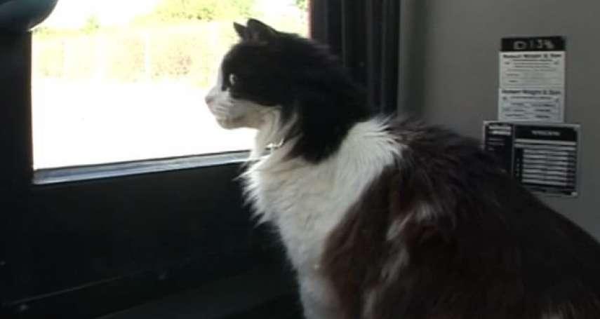 貓咪暖心故事》喜歡坐公車的卡斯珀、蹲點電車站的本頓、火車站「職員」費利克斯與博爾特