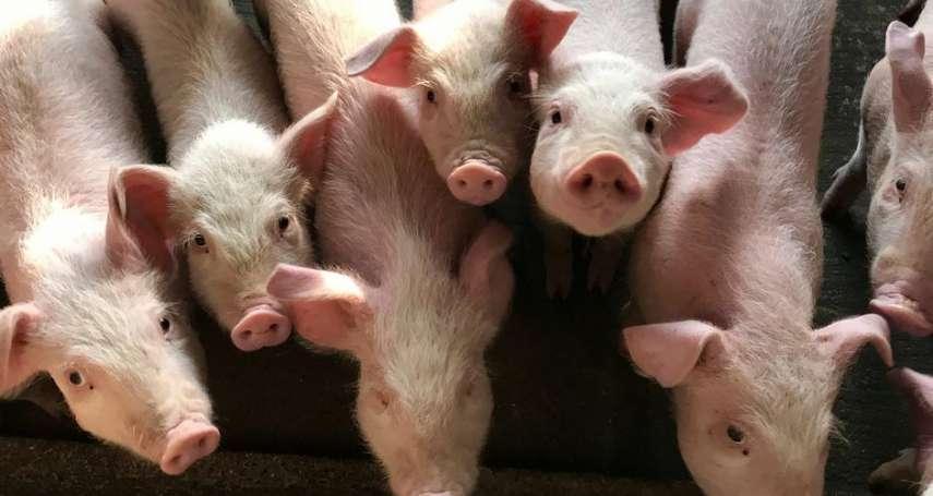 想吃豬肉憑實力!貴州小學獎勵優等生:期末考第一名可領豬肉30斤