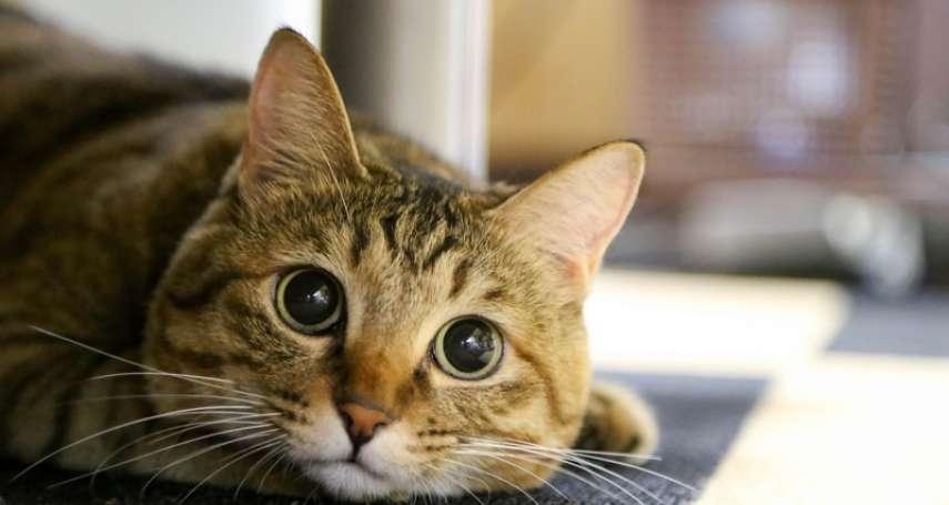 為何有人那麼愛「吸貓」?又為何貓在人類眼中如此特別?關於貓咪你一定要知道的5件事