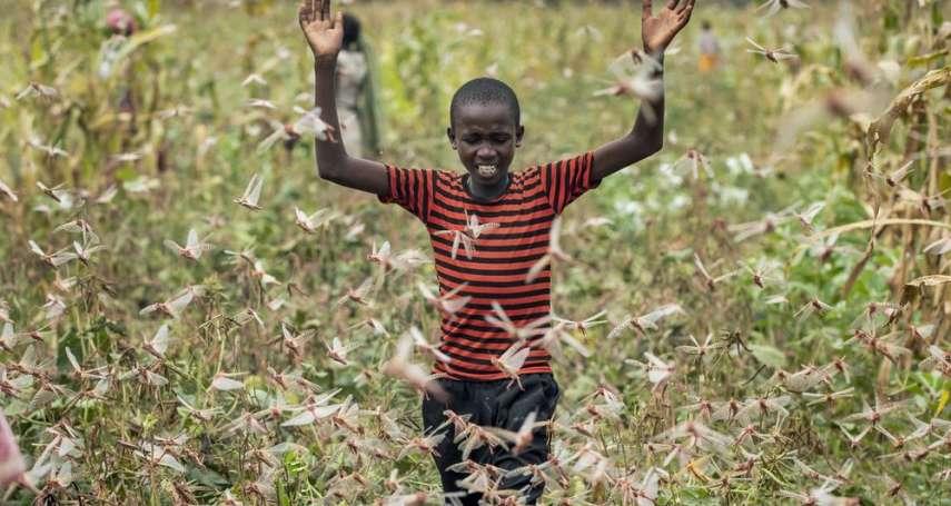 不只武漢肺炎!非洲東部驚見數十億蝗蟲襲擊糧倉,華盛頓郵報:有如聖經蝗害成真