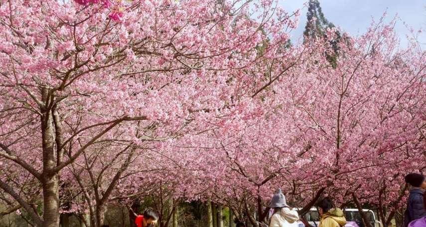 余宜芳專欄:日本怎麼了?疫情下的賞櫻