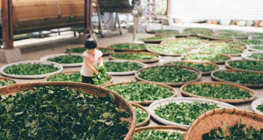 紅茶、綠茶、烏龍茶竟然都來自同一種植物?99%人不知道的茶葉冷知識,大師親自講解!