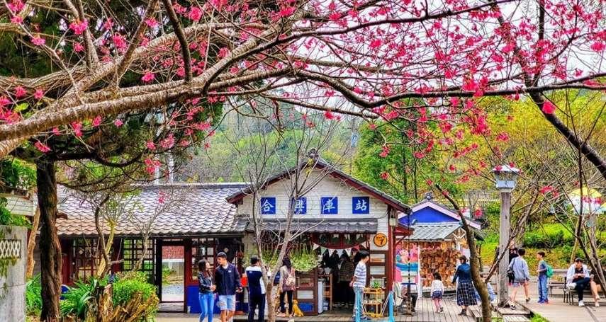 開滿櫻花的懷舊車站、絕美薰衣草森林…全都在新竹內灣線!揭秘鐵道之旅夢幻景點