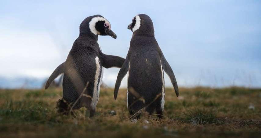 南極飆破20度!企鵝成全球暖化最無辜受害者,他親赴南極拍下這些怵目驚心的照片