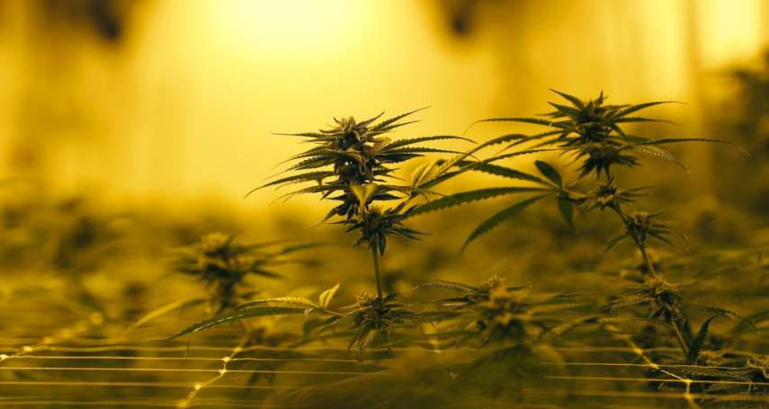 新冠肺炎風暴》荷蘭政府宣布暫時關閉紅燈區,荷蘭民眾蜂擁而出搶大麻!
