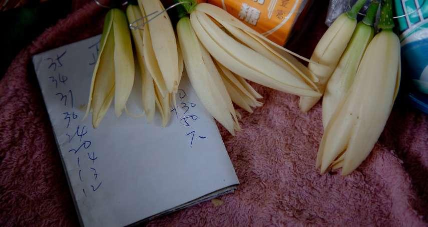 紓困之亂讓玉蘭花價暴漲6成?業者駁斥:根本沒變,賣更貴的是這種花