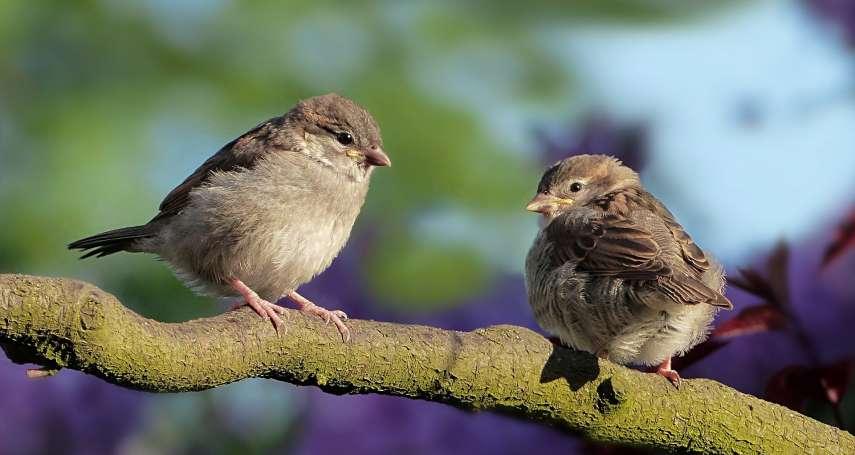 千萬年來最強生物!為何鳥類祖先能躲過恐龍大滅絕?台灣團隊發現驚人真相