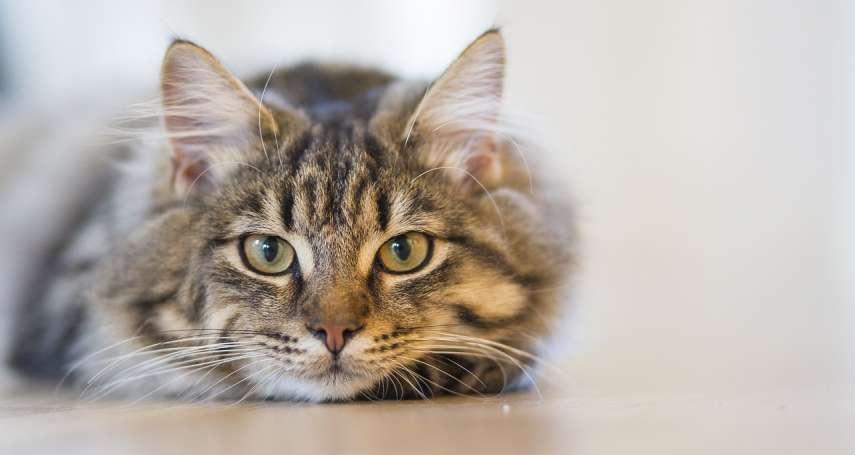 法國善心人士暖心留遺產給喵星人 俄羅斯冬宮博物館50隻萌貓受益