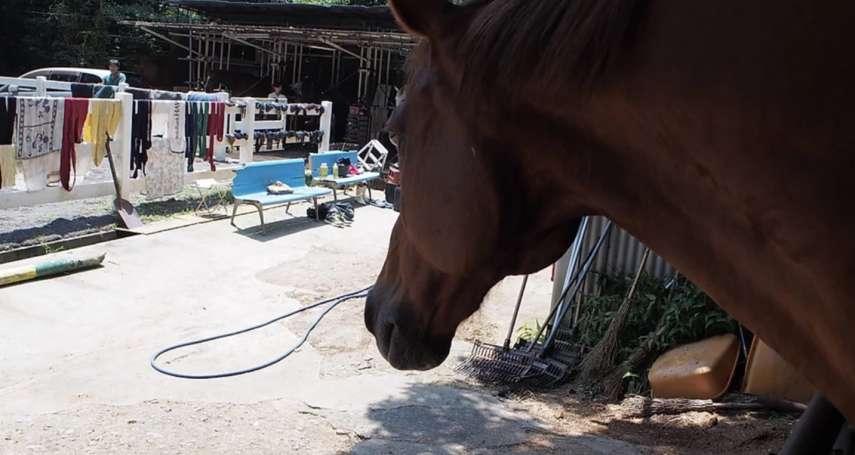 疫情影響沒錢買飼料 日本靜岡大學馬術部:可能被迫宰殺所有馬匹,拜託各界捐款救急