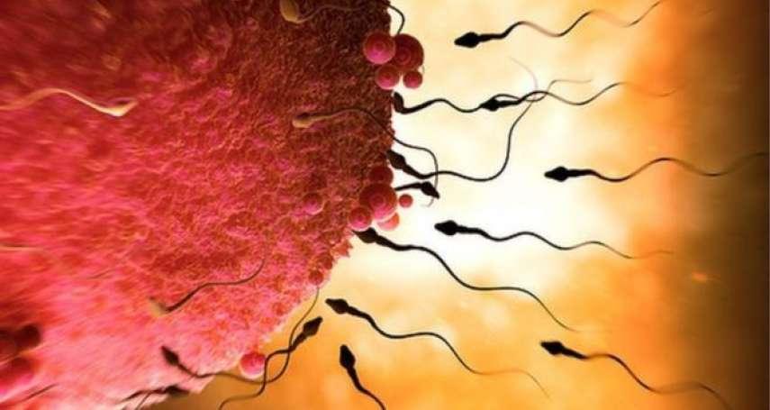 妳的卵子「擇偶條件」可能和妳不一樣!研究:卵子能夠「挑三撿四」伴侶精子也未必中選