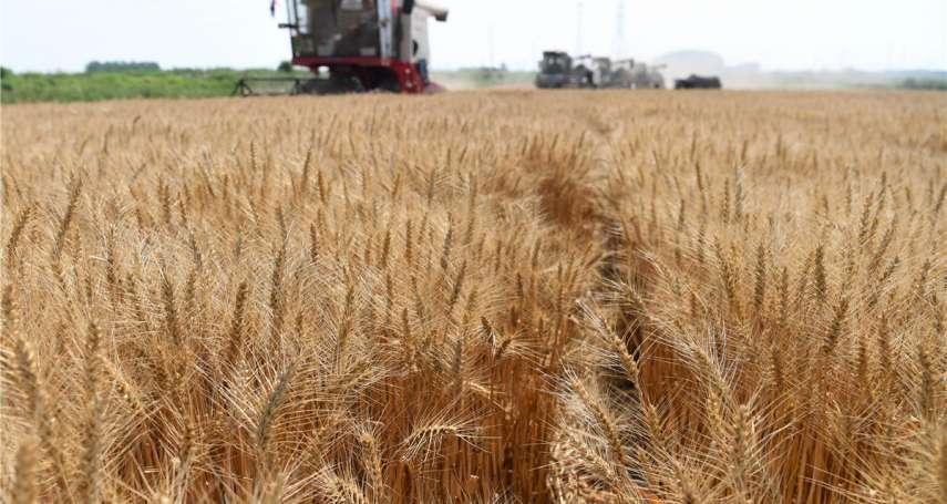 比股票還會噴!「黃小玉」絕地大反攻,農產品這波漲勢還能維持多久?