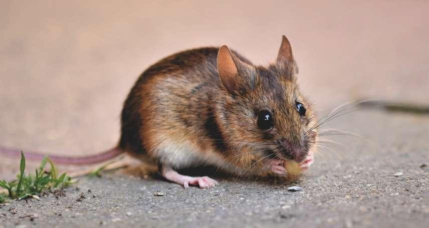 疫情創20年新高!再添漢他病毒出血熱病例,他生活周遭竟抓到11隻老鼠