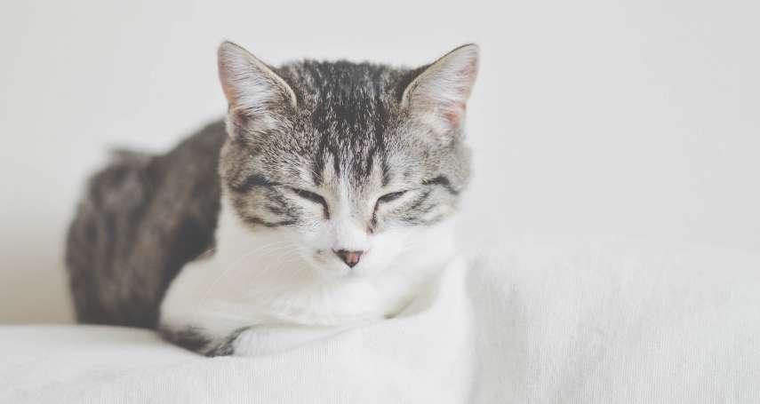 有貓貓就融化?美國最新研究:女性較不願跟養貓男士約會