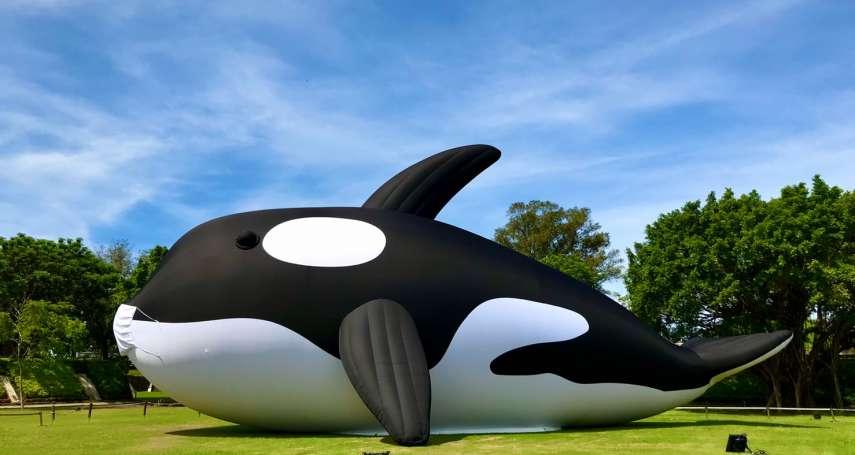 安平虎鯨Orca萌樣抵臺防疫隔離 億載金城重砲保護