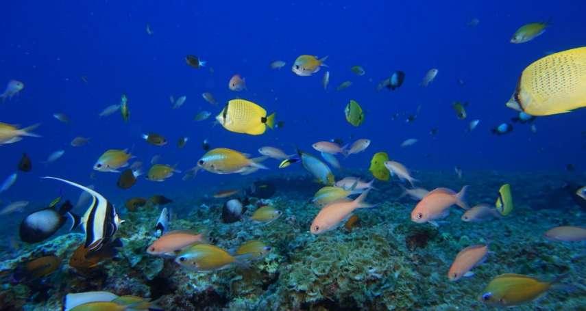 海洋藻類銘記地球有多暴力……研究驚人發現:「公牛海帶」基因藏有地震歷史痕跡!