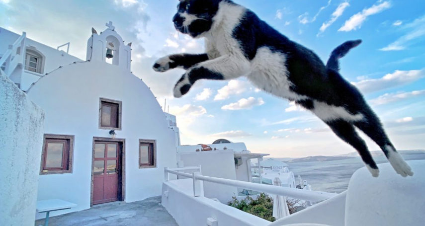 貓在天上飛?iPhone攝影大賽,兩台灣攝影師獲獎