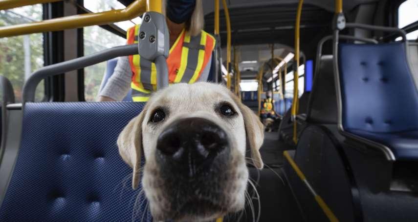 好狗狗!捷克最新研究:犬隻可嗅出新冠病毒 準確率高達95%