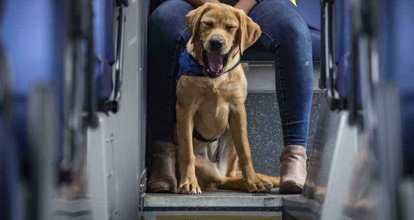 減輕受害兒童心理負擔 日本法院特許「法院陪伴犬」陪同出庭