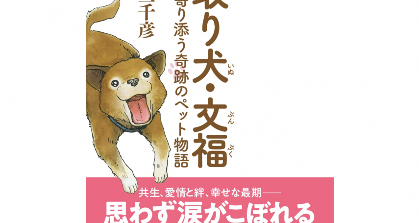 預知死亡的奇蹟柴犬:日本安養機構的照護犬「文福」,溫柔陪伴高齡者走完人生
