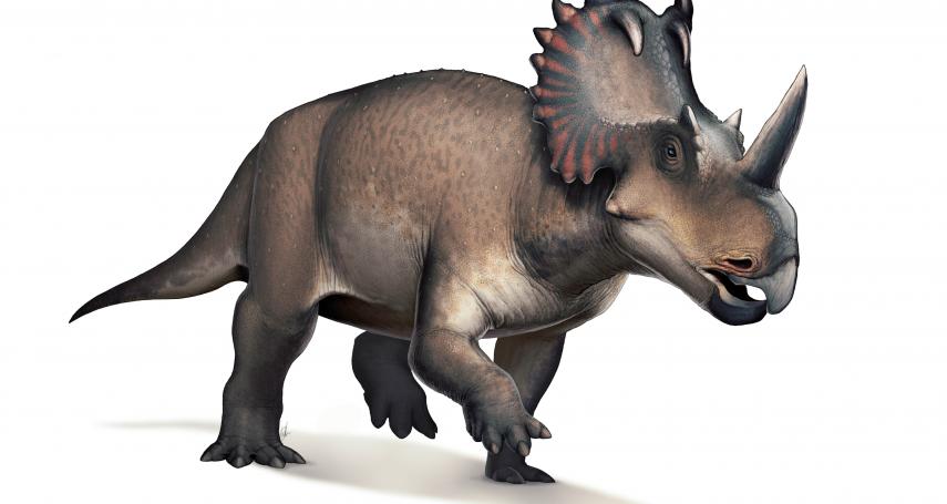 史上第一例!恐龍也會得癌症《刺胳針》:7700萬年前的尖角龍罹患骨肉瘤