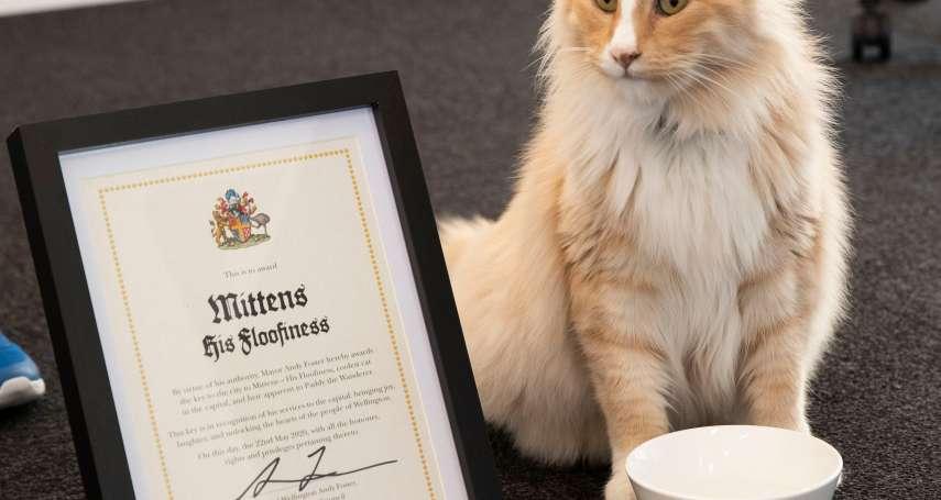 喵星人魅力無法擋》紐西蘭年度代表人物候選名單揭曉 這隻「名貓」竟成為總理的最強競爭對手!