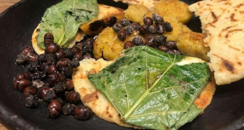 珍貴有如魚子醬、烤過就像脆培根!哥倫比亞神秘美食:擁有圓滾滾臀部的南美切葉蟻