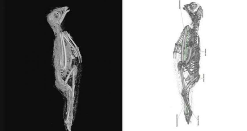被勒死、被祭殺、被陪葬......神秘古埃及大揭密:科學家幫動物木乃伊做電腦斷層掃描