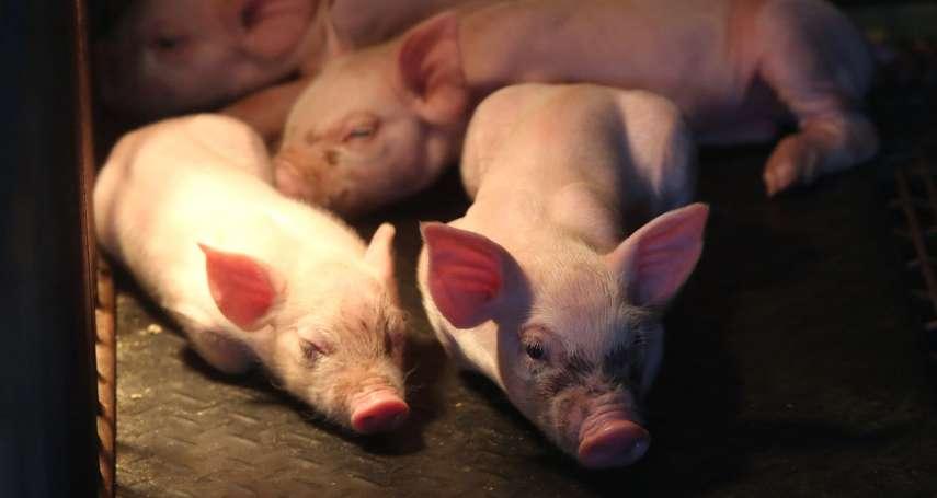 偷豬賊橫行!超過600頭豬遭竊 日本群馬縣政府出錢幫裝監視器