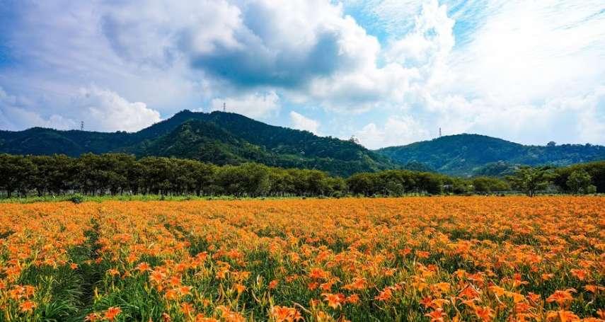 【2020金針花景點】台灣也有人間仙境!公開全台6個賞金針花的超夯景點,遍地金黃花海實在太美了