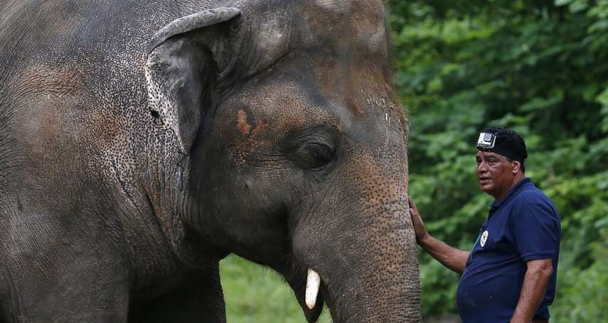 被關35年、腳趾甲斷裂、不自主搖頭晃腦!「全球最寂寞的大象」終於要搬家了