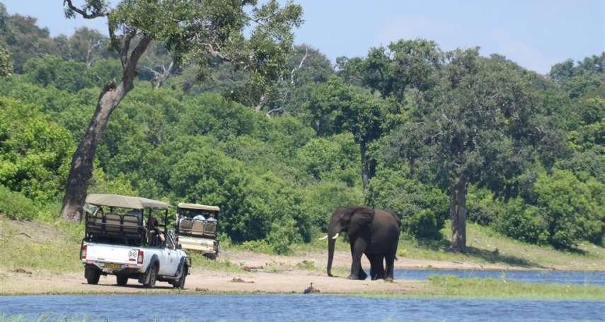 非洲超過三百頭大象神秘死亡 科學家懷疑藍綠藻神經毒惹禍