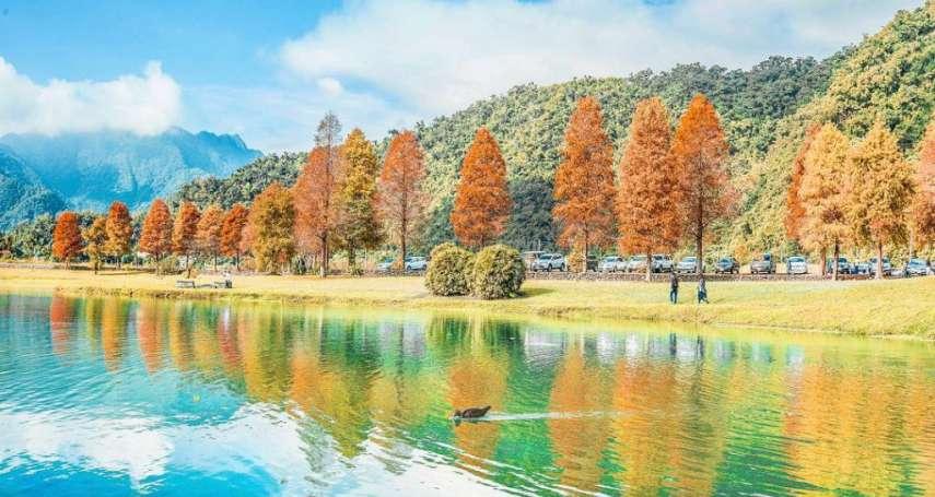 秋天必去的絕美金色大道!盤點10個宜蘭太平山毛櫸步道的最新玩法,一起享受秋天的美好吧