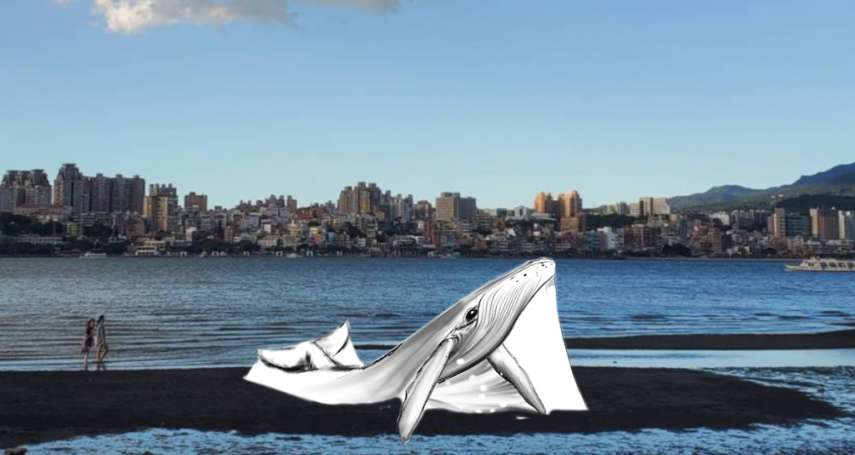 12米大鯨魚三小時就消失!八里快閃沙雕11日登場