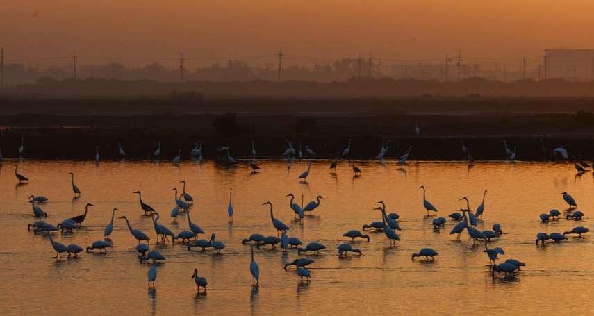 鳥類無國界》台灣鳥人當自強!公民熱血連結世界,貢獻國際鳥類資料庫